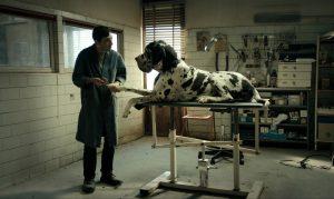 あまりに奇妙で、しかし胸を打つ結末『ドッグマン』 無名の主演俳優がカンヌ映画祭 男優賞受賞
