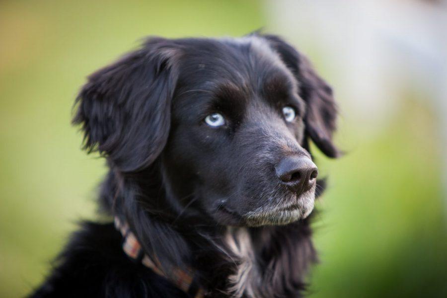殺処分犬の保護がきっかけで、究極の農園を作った家族の奇跡『ビッグ・リトル・ファーム 理想の暮らしのつくり方』