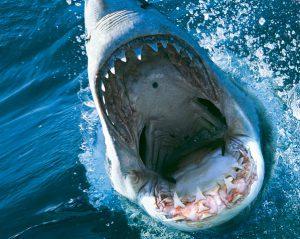 """最高知能を持つサメ映画の新作は""""かつてないほど致命的""""⁉ 『ディープ・ブルー3』10月7日デジタル配信開始!"""